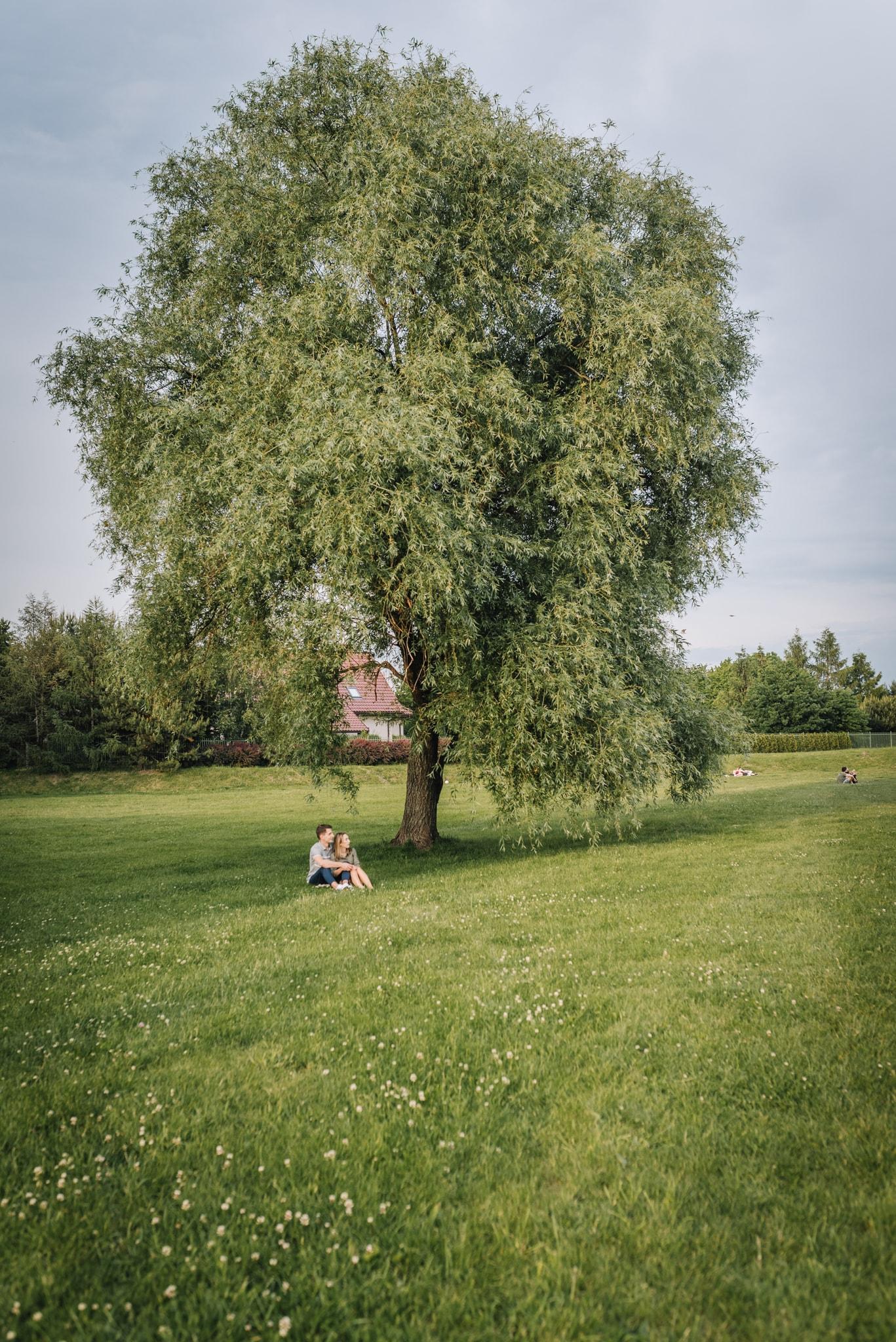 siedząca para pod drzewem